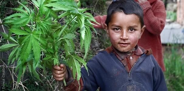 crianca-marijuana