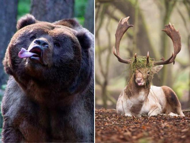 natureza-animal (7)